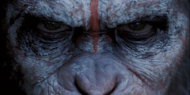 Apornas planet uppgorelsen